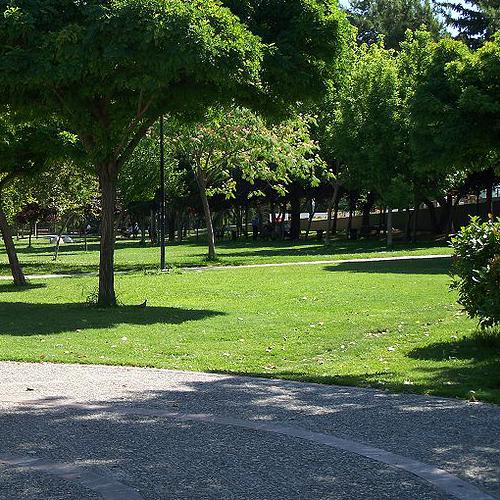 having sex In the park